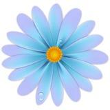 Flor con descensos Imagen de archivo libre de regalías