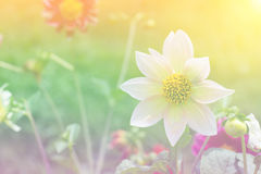 Flor con el color suave del foco filtrado Fotos de archivo libres de regalías