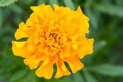Flor con el flor anaranjado foto de archivo