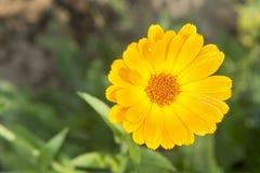 Flor con el flor anaranjado imagen de archivo
