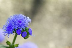Flor con el flor violeta imagen de archivo libre de regalías