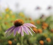 Flor con el fondo colorido Imagenes de archivo