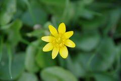 Flor con el ontop de la mosca Imágenes de archivo libres de regalías
