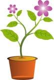 Flor con el pote ilustración del vector