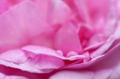 Flor con el primer. Foto de archivo libre de regalías