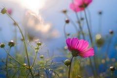 Flor con el rimlight Fotografía de archivo