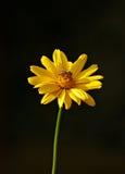 Flor con la abeja Fotos de archivo libres de regalías