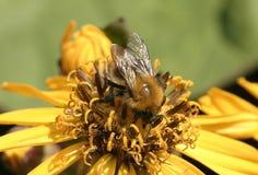 Flor con la abeja Imagenes de archivo