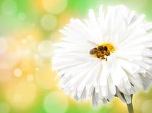 Flor con la abeja Foto de archivo libre de regalías