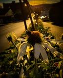 Flor con la abeja que hace frente a la ciudad imagen de archivo