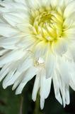 Flor con la araña Fotografía de archivo libre de regalías