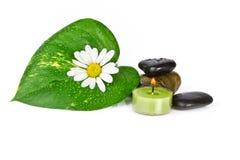 Flor con la hoja verde aislada imágenes de archivo libres de regalías