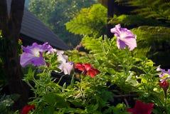Flor con la luz de la mañana Fotografía de archivo libre de regalías