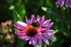 Flor con la mariposa fotografía de archivo
