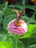 Flor con la mariposa Fotos de archivo libres de regalías