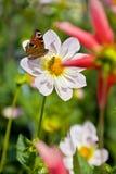 Flor con la mariposa y la abeja adentro Foto de archivo libre de regalías