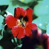 Flor con la mosca de la libración Foto de archivo