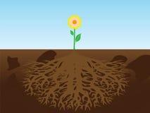 Flor con la raíz Imagenes de archivo