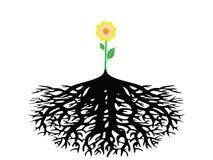 Flor con la raíz aislada Fotos de archivo libres de regalías