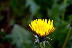 Flor con las hormigas Foto de archivo libre de regalías
