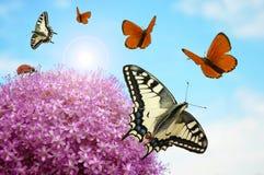 Flor con las mariposas y el ladybug Imagen de archivo libre de regalías