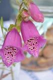 Flor con las tazas de café Foto de archivo libre de regalías