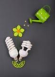 Flor con los bulbos del eco como hojas Fotografía de archivo libre de regalías