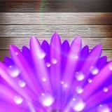 Flor con rocío en la madera EPS10 más Foto de archivo libre de regalías