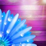 Flor con rocío en la madera EPS10 más Imagen de archivo libre de regalías