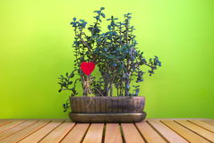 Flor con símbolo del amor Imagen de archivo libre de regalías