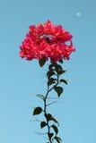 Flor con textura clara Fotos de archivo libres de regalías