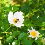Flor con un insecto Fotos de archivo