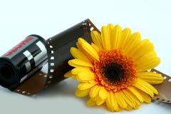 Flor con una película imagen de archivo