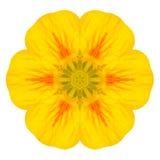 Flor concéntrica amarilla de Nasturium aislada en blanco. Mandala Design Imagen de archivo