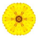 Flor concéntrica amarilla del Gerbera aislada en blanco. Mandala Design Fotos de archivo libres de regalías