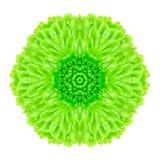 Flor concéntrica verde aislada en blanco. Mandala Design Foto de archivo