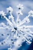 Flor congelada Imagenes de archivo