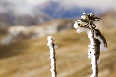 Flor congelada Fotografia de Stock