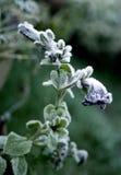 Flor congelada Foto de archivo libre de regalías