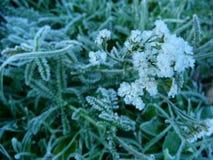 Flor congelada Imagem de Stock Royalty Free