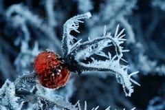 Flor congelada Fotografía de archivo libre de regalías