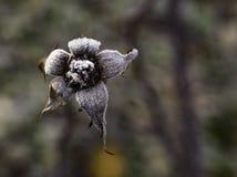 Flor congelada imagens de stock