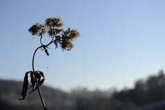 Flor congelada, céu no fundo imagens de stock