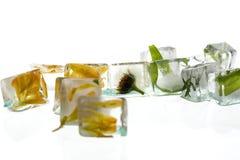 Flor congelada en cubos de hielo Imagen de archivo libre de regalías