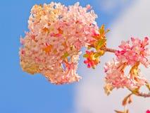 Flor consideravelmente cor-de-rosa com o céu azul Imagens de Stock Royalty Free