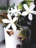 Flor-conto imagem de stock royalty free