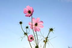 Flor contra el cielo azul Imagenes de archivo