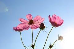 Flor contra el cielo azul Imágenes de archivo libres de regalías