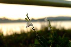 Flor contra el cielo de la puesta del sol Imagen de archivo