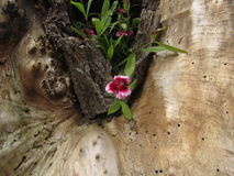 Flor contra el viejo fondo del árbol Imagen de archivo libre de regalías